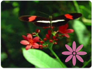 Download free Butterflies screensaver- Blooms & Butterflies