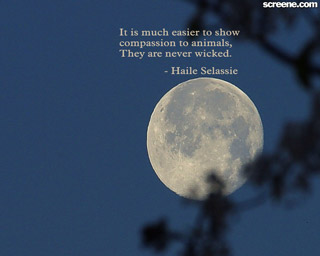 Download Free Compassion Wallpaper
