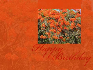Download Free Birthday Wallpaper